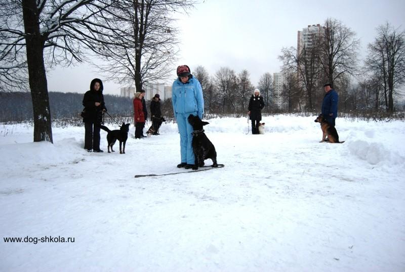 дрессировка собак в группах