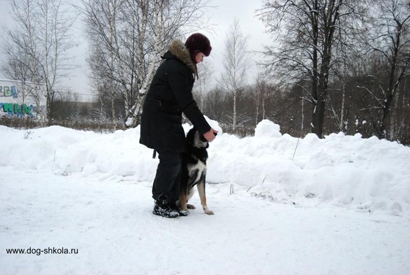 площадка для дрессировки собак