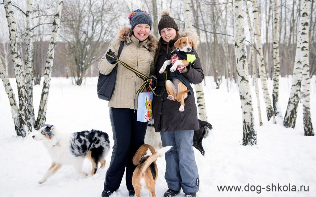 Дрессировка собак в Новой Москве