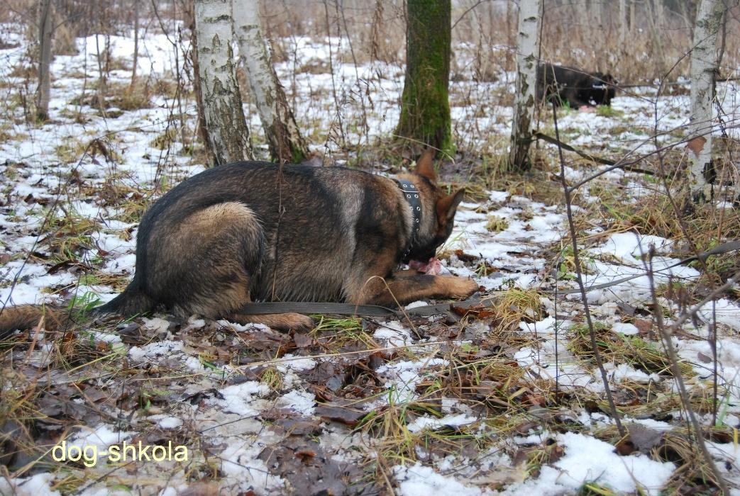 Немецкая овчарка воспитание