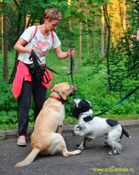 Собака ищет людей