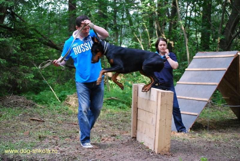Собака подбирает с земли