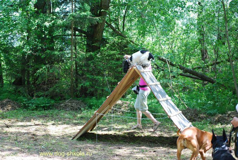 Тренировка собак на снарядах