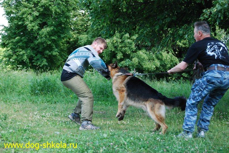 подготовка собак телохранителей