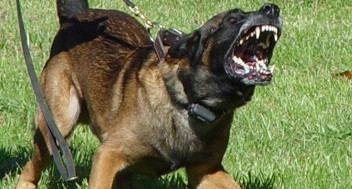 Территория охраняется собаками