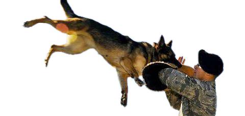 Защитная собака