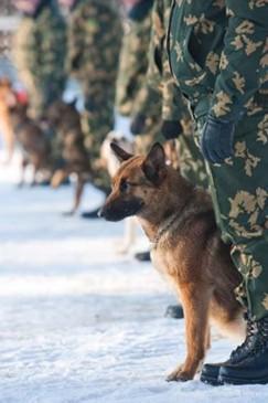 ЦШВС школа военного собаководства