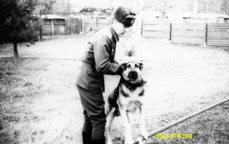 Немецкая овчарка ГДР