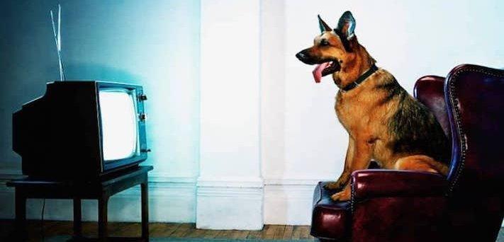 Дрессировка собак дома