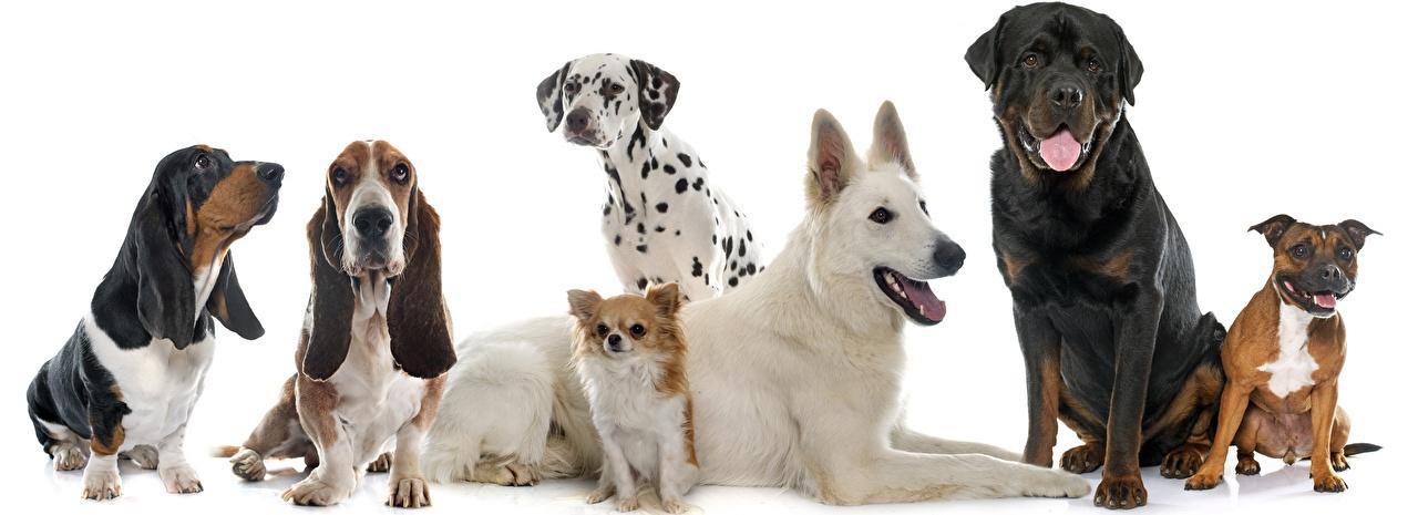 тесты поведения собак
