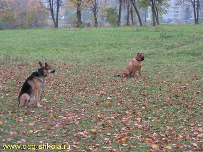 Дрессировка собак в Тропарево