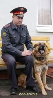 Служебно-розыскная собака