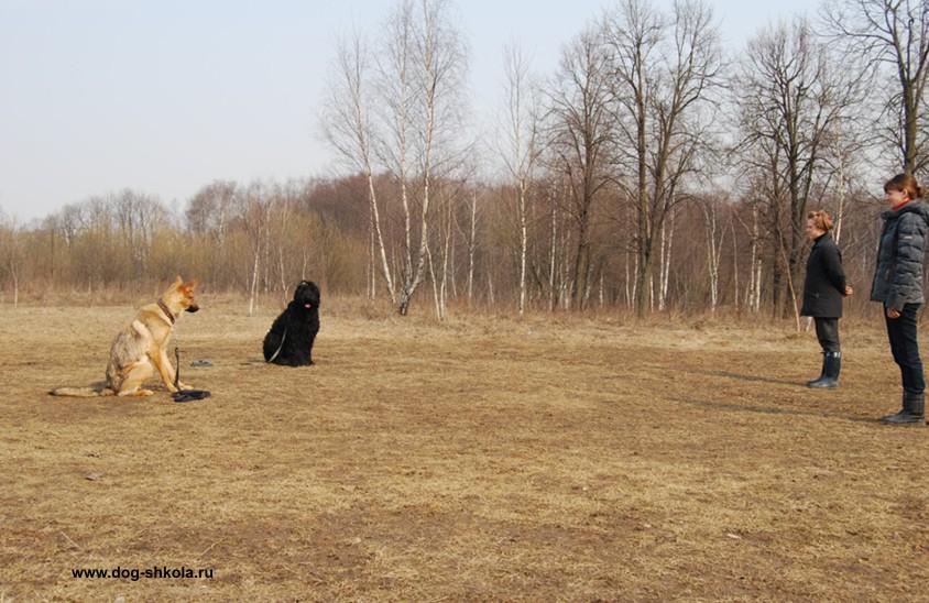 Чехословацкий влчак обучение