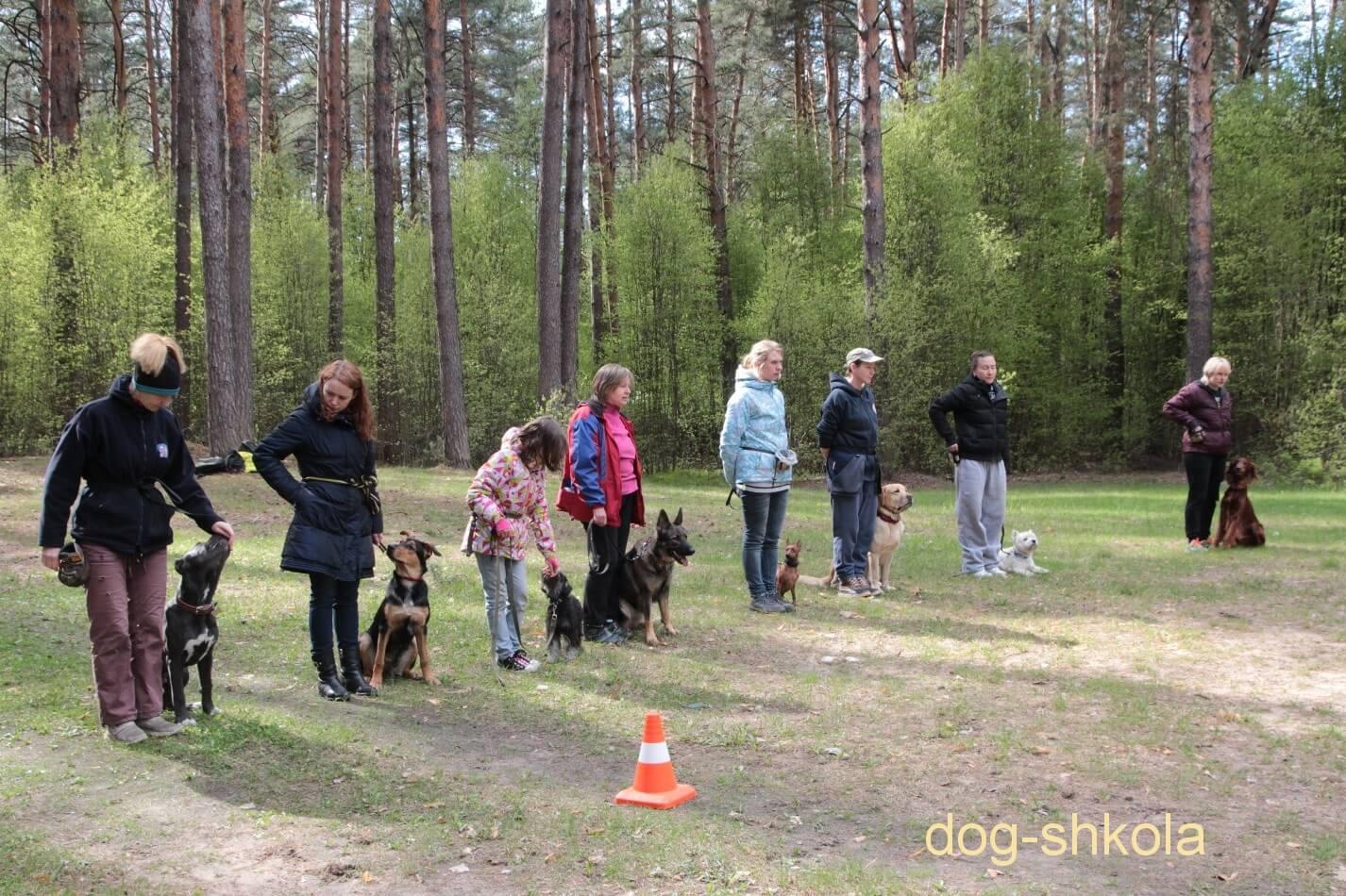Дрессировка собак в группе