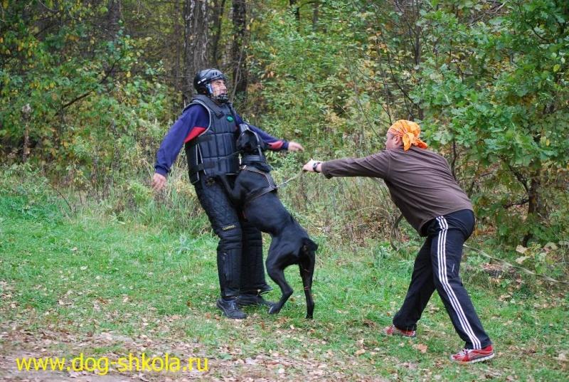 Собака атакует в плечо
