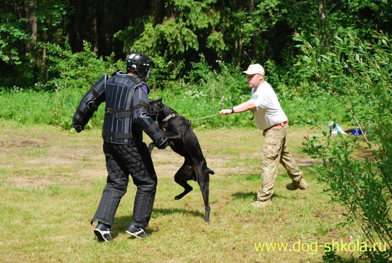 Собака для реальной защиты