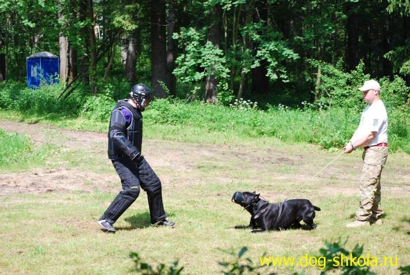 Собака телохранитель